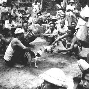 Balinese Cockfight 1949 by Alred Palmer